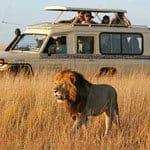 prismáticos para safari
